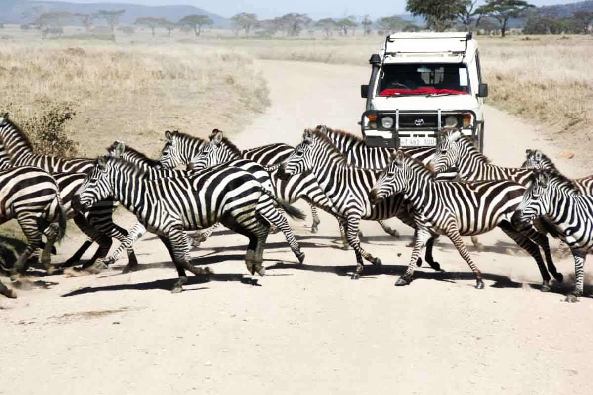 Voyager en Tanzanie tout ce que vous devez savoir