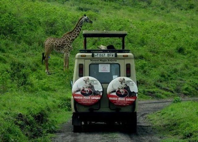 Opter pour un voyage safari à la découverte de la Tanzanie